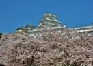 桜海に浮かぶ姫路城…
