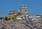 春色に囲まれた白鷺城…