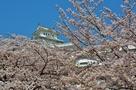 垣間見える春の姫路城…