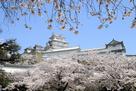 桜降る白鷺城