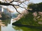 牛ヶ淵角土塁の桜…