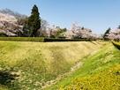 馬出し空濠と桜…