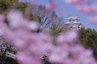 柔らかな春の日…