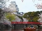 和船に乗って特別なお花見を。…