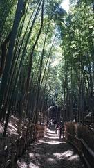 竹林の空堀