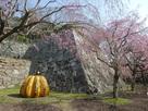 石垣と桜と《南瓜》…