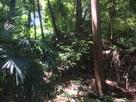 なかなかジャングルな空堀の底から…