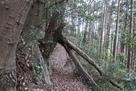 武者走りの倒木…