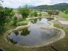 復元された東池…