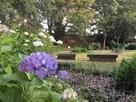 紫陽花と本丸土塁…