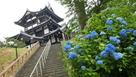 三重櫓と紫陽花…