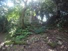 出曲輪北東斜面の登り石垣と竪堀…