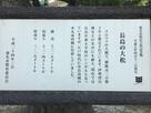 長島の大松の案内板…
