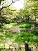 下茶屋公園池(伝古渡城堀跡)…