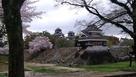 桜と熊本城