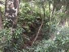 化粧池の石垣