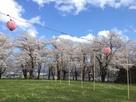 桜満開の本丸庭園…