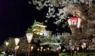 夜桜とライトアップされた松江城…