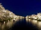 西堀の夜桜