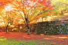 紅葉と八幡曲輪石垣…