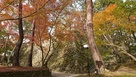 石垣&紅葉