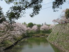 石垣と内堀と桜…