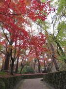城跡と紅葉