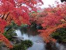 好古園の紅葉