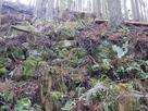 井戸跡周辺に残る石垣