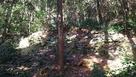御主殿跡西側の現存石垣2…