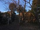 朝日に照らされる本丸石垣…