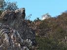 山頂を見上げる(東坂ハイキングコース)…