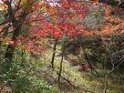 本丸内堀の紅葉…