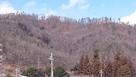 丸子城近くの尾野山城本郭の遠景…