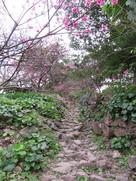 旧道と咲き始めたヒガンザクラ