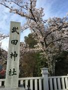 桜を求めて再来…