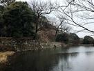 桜堀と本丸石垣…