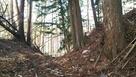 秋葉神社(旧本丸跡)背後の堀切…