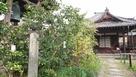妙教寺内唯一無二の石碑…