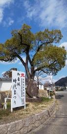 公園入口、祭りの看板と石碑