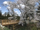 本郭にかかる橋と桜…