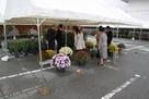 篠山市菊花展の様子…