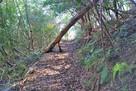 第Ⅲ郭へ向かう林道…