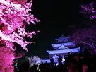 桜と天守(チームラボ 光の祭)…