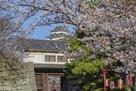 岡口門と桜