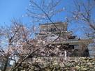 天守東面と桜