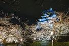 ブルーライトアップと桜…