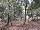 日野神社の森