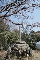 城跡之碑と桜