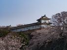 姫路城 ワの櫓と桜…